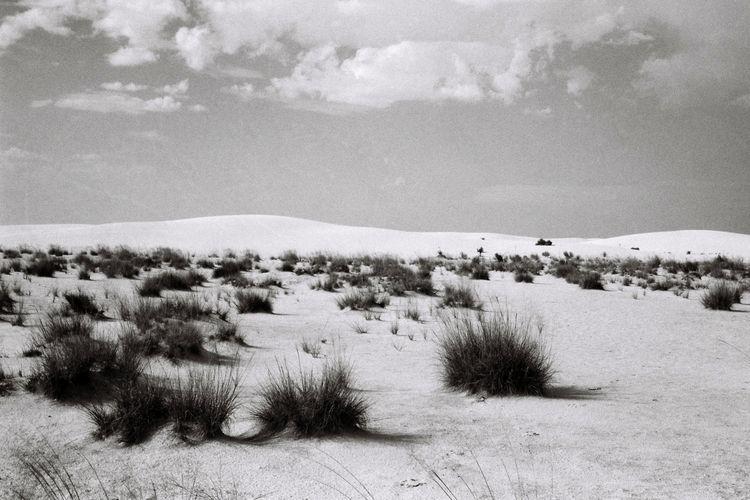Santuario - 35mm, film, analog, photography - noeangelito   ello