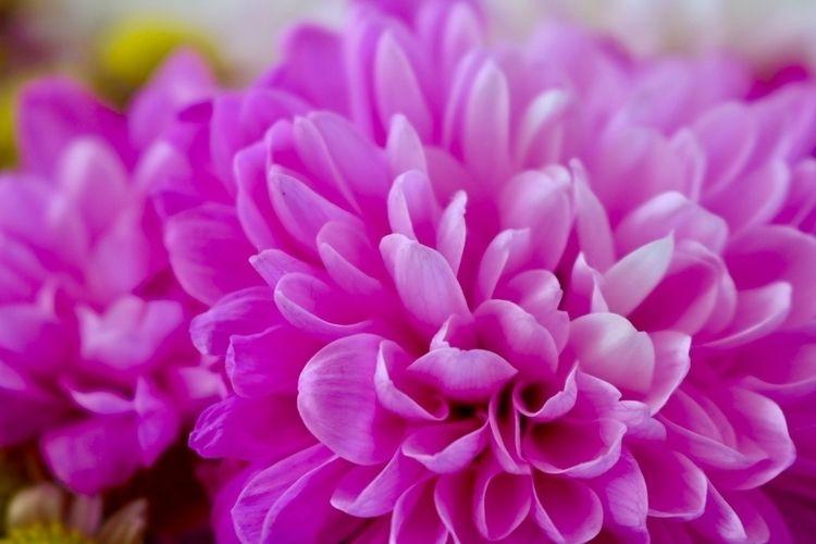 Flowers Spring Day - Canon, CanonEOS - alexlamond | ello