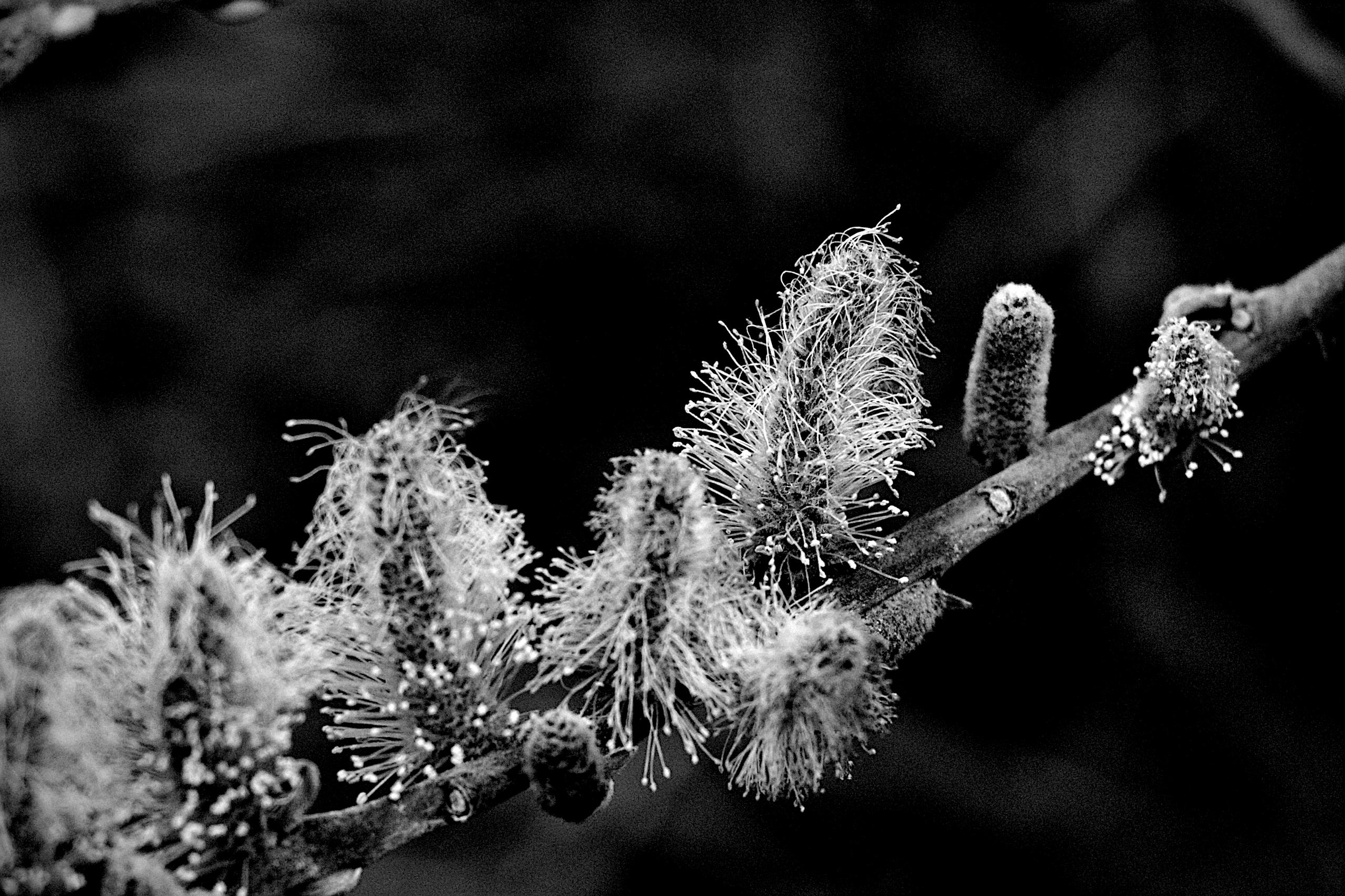 Botanical Monochrome 6570 - flowerphotography - dorian-stretton   ello