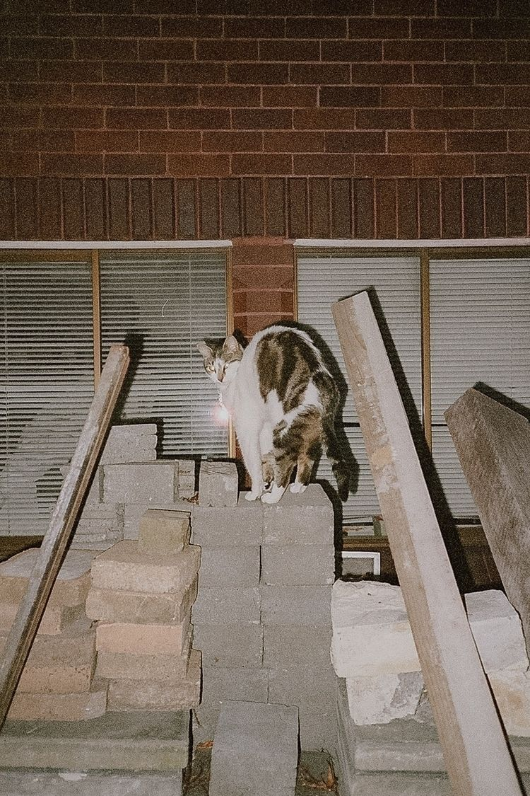 sp00ky - 35mm, catsonfilm, cat, analoguephotography - laurazac | ello