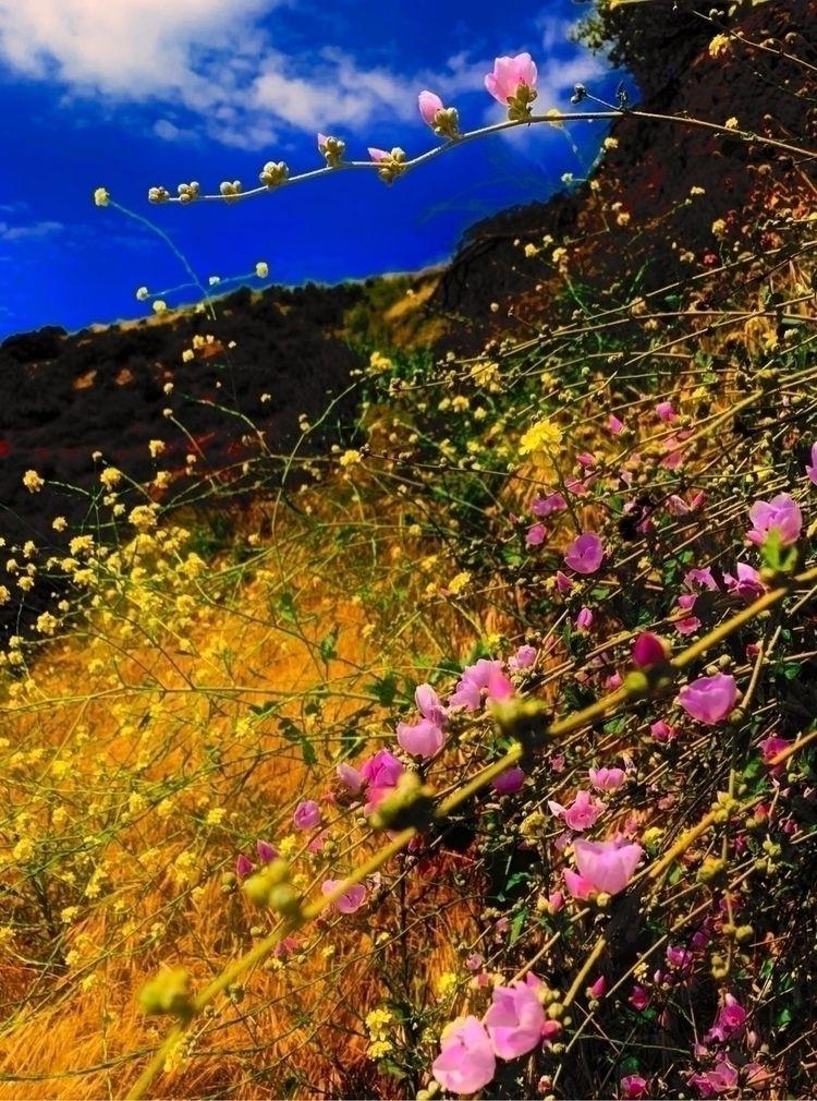 colors, wild, flowers, hike, losangeles - heewhoo | ello