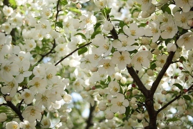 spring sprung - flowers, photography - karpuk | ello