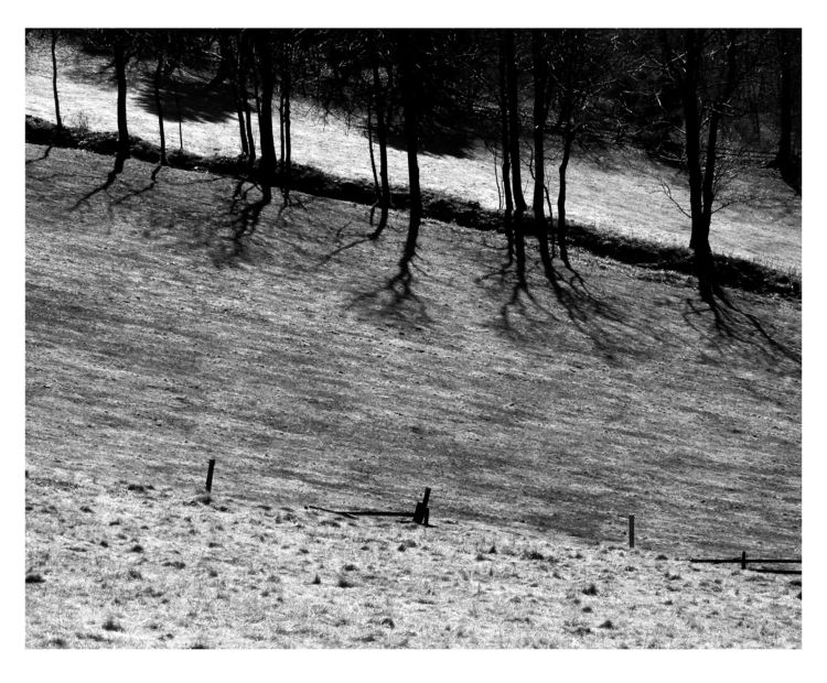 Marching Trees - bw, bnw, blackandwhitephotography - brthelemy   ello