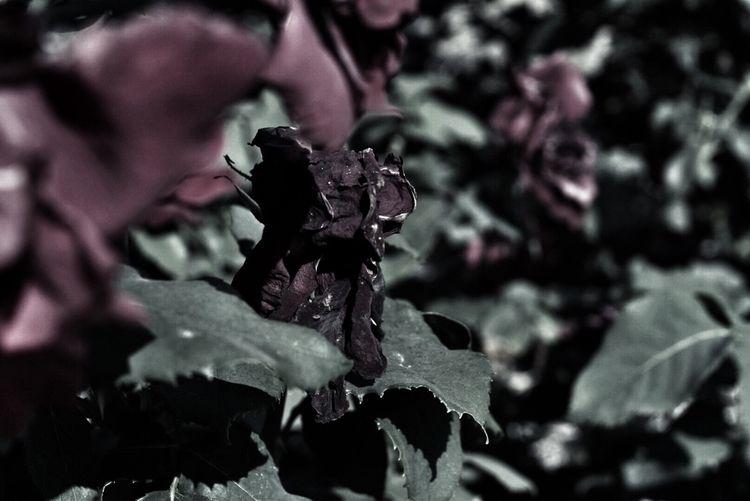 photography, naturephotography - keina | ello