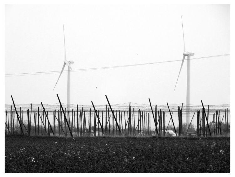 Wind turbines hop field - bw, bnw - brthelemy | ello