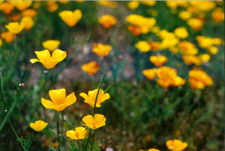 wildflowers amazing! boring res - amyrenee121   ello