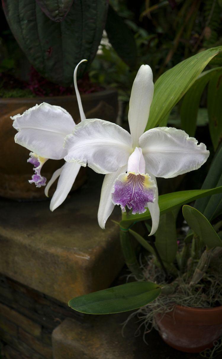 Les orchidées du jardin des pla - gclavet | ello