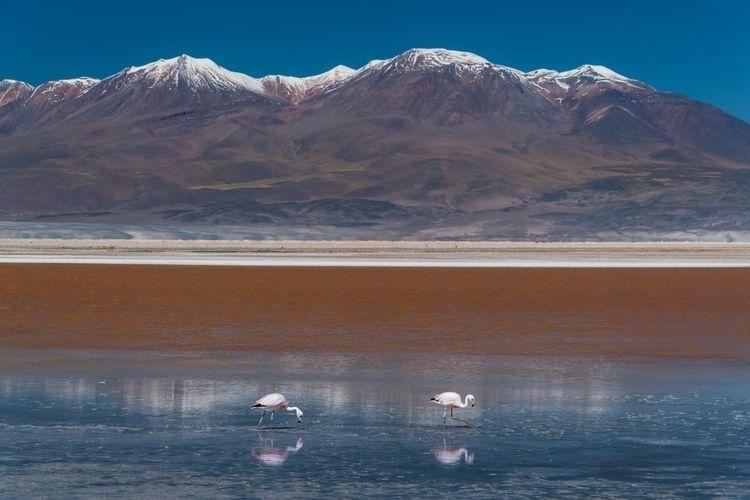 Atacama, Chile shot snapped swe - dis_satisfied | ello