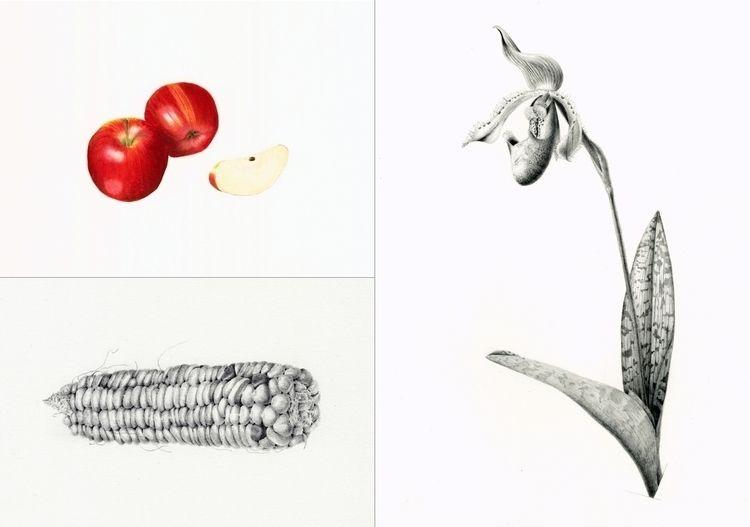 Botanically accurate illustrati - steppielee | ello