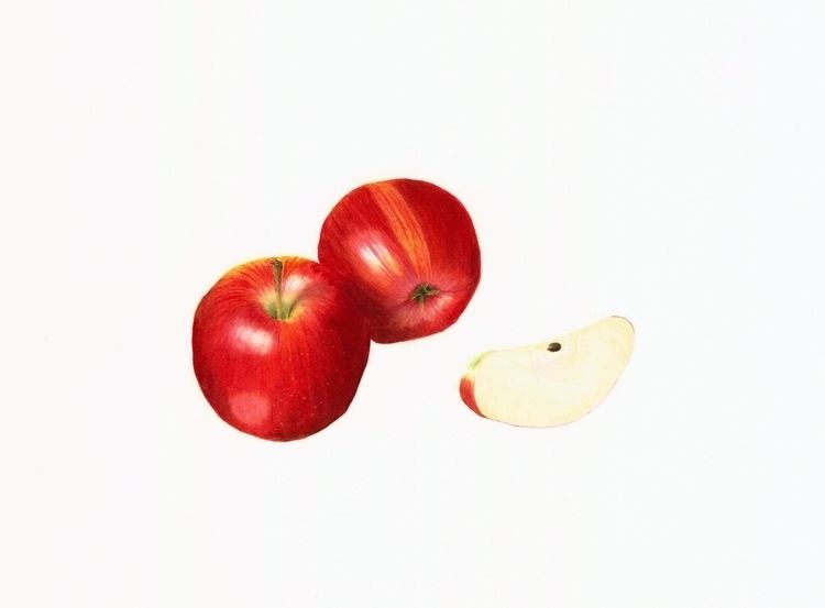 Watercolor painting - Gala appl - steppielee | ello