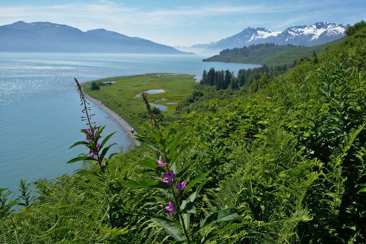 View blue waters Port Valdez, f - lwpetersen | ello