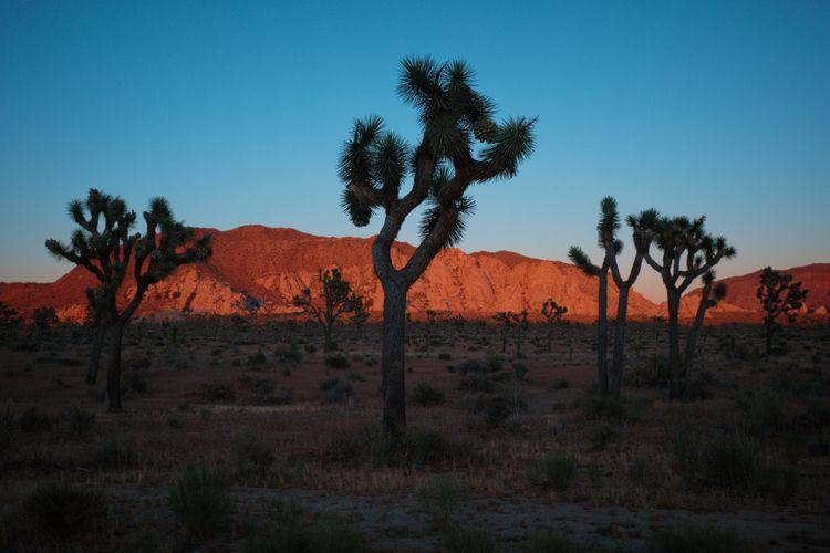 Sunset Joshua Tree National Par - allunderheaven | ello