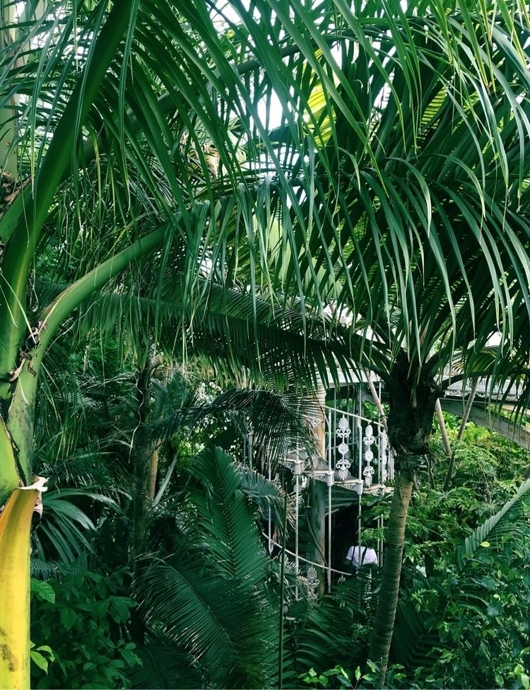 kew gardens, 2019 - snapshot, photooftheday - them   ello