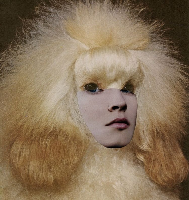 Collage Bep Broos - collage#analogcollage#art#poodle#face#poodleface#contemporarycollage#contemporaryart#contemporaryartist#visualart#surreal#art#analogcollage#artist#kunst#portrait - bepbroos | ello