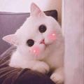 Kitten (@kohaku) Avatar