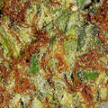 CannabisHighway (@cannabishighway) Avatar