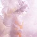 pavonia (@pavonia) Avatar