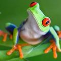 FrogTourist (@frogking) Avatar