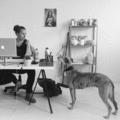 Renate Stevens (@renatestevensontwerp) Avatar