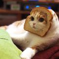 Cat, pleasure (@dontgiveafuck) Avatar