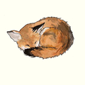a sleepy fox (@sleepyfox) Avatar