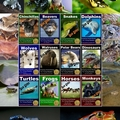animal facts posters (@freeanimalfact) Avatar