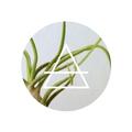 plantasdeaire (@plantasdeaire) Avatar