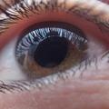 Eye Doctor In Torrance (@optometristredondobeach) Avatar