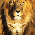 Lion and Lamb Studios (@lionandlambstudios) Avatar
