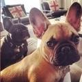 Penny & Bruno 🐶 (@thepbandj) Avatar