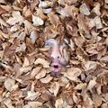 Jürg Steigmeier (@erzaehler) Avatar