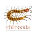 @chilopoda_pics Avatar