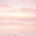@pinkparadise Avatar