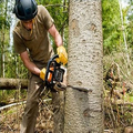 Rochester Tree Pros (@rochtreeservice) Avatar