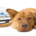 Premier Pet Transport (@premierpettransport) Avatar