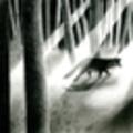 @elenaillustration Avatar