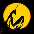 @nadavbagim Avatar