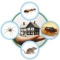 Angie Pest Control (@angiepestcontrol) Avatar