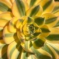 @queenofsucculents Avatar