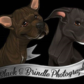 Black & Brindle Photography (@blackbrindlephotography) Avatar