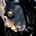 Tyler (@tyland) Avatar