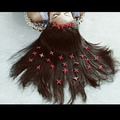 Chaslane Grace  (@chaslanegrace) Avatar