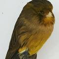 Burung Master Indonesia (@burungmaster) Avatar