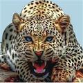 Leopard Nature Camp (@leopardnaturecamp) Avatar