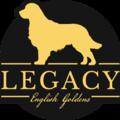 Legacy Englishgoldens (@legacyenggoldoh) Avatar