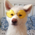(@dogsy) Avatar