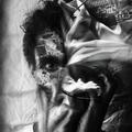 Alexander  (@wagginstaff) Avatar