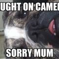 proud bulldog mum  (@simplymagickal) Avatar