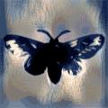 Hello Moth (@hellomoth) Avatar