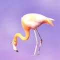 Flustered Flamingo (@flusteredflamingo) Avatar